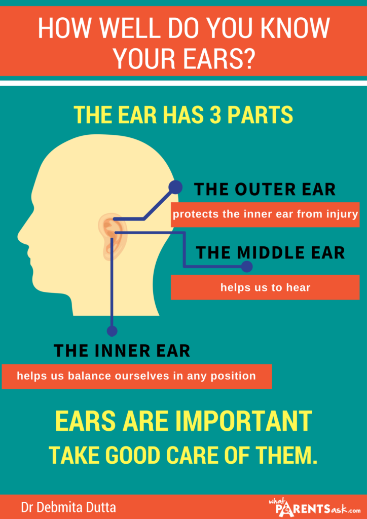 the parts of the ear
